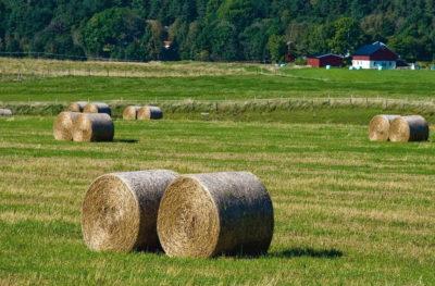 batiments agricoles photovoltaiques
