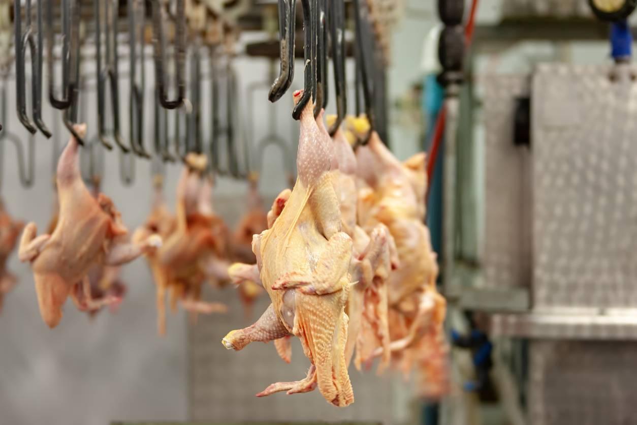 viande séparée mécaniquement, processus