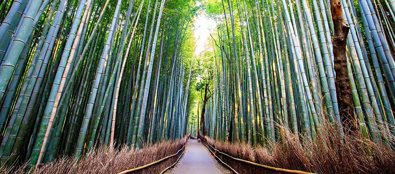 Faire un voyage au japon